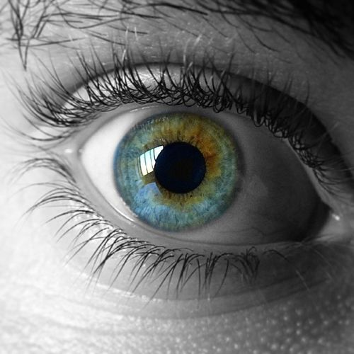 Carlos. Eye Instaeye Ig_colorsplash Ig_bw bw instagood bestoftheday blancoynegro ojo enfocae instafoto_ve instaflow ig_falcon igcapturesclub ig_mexusa ig_italia ig_phenomenal igers ig_merida ig_valencia ig_worldclub ig_spain ig_photogramers