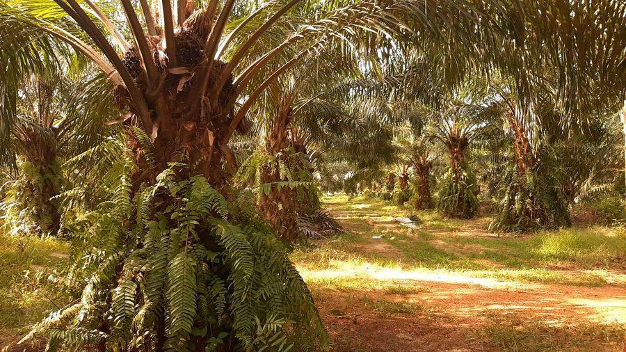 Palm trees on field in forest