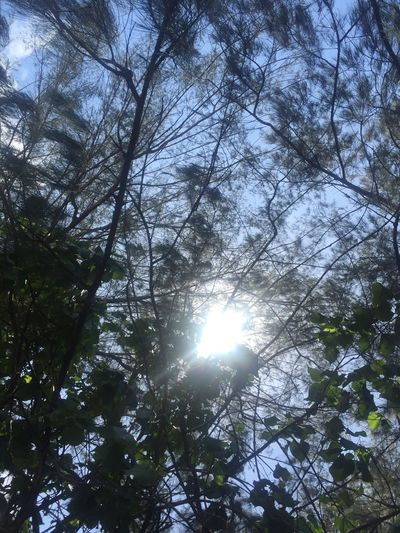 The Purist (no Edit, No Filter) Sun Sunbeam Lens Flare Sunlight Low Angle View Tree Nature Beauty In Nature No People Growth Sky Outdoors Streaming Tranquility Shining Scenics Branch Day