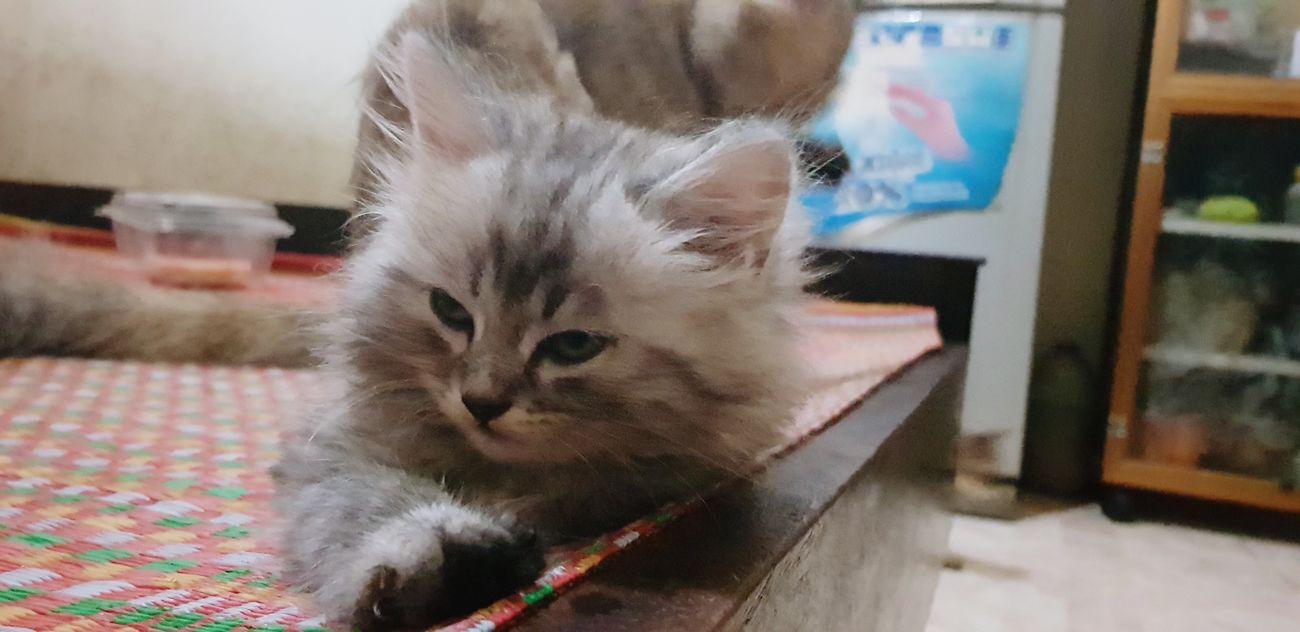 Pets Portrait Feline Domestic Cat Close-up
