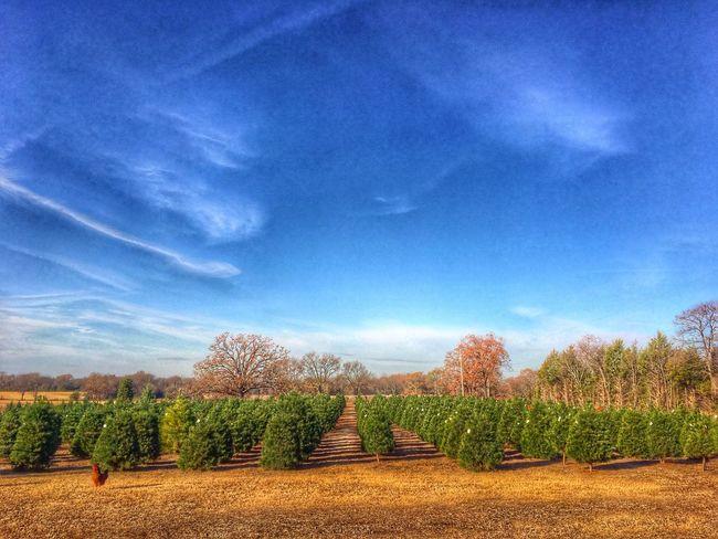 Tree Farm (null)Christmastime Ohchristmastree Arkansas