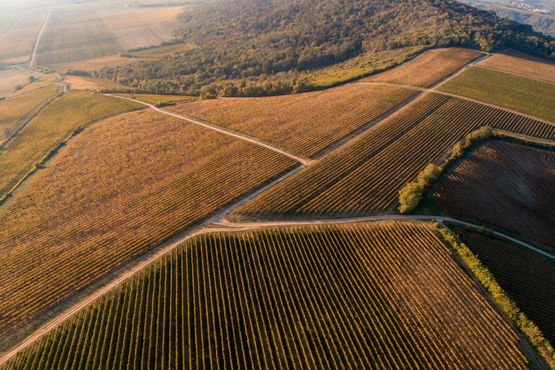High angle view of grape plantations near villany wine region in hungary in the autumn