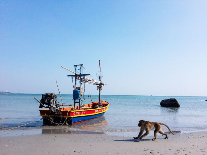 View of dogs on sea against clear sky