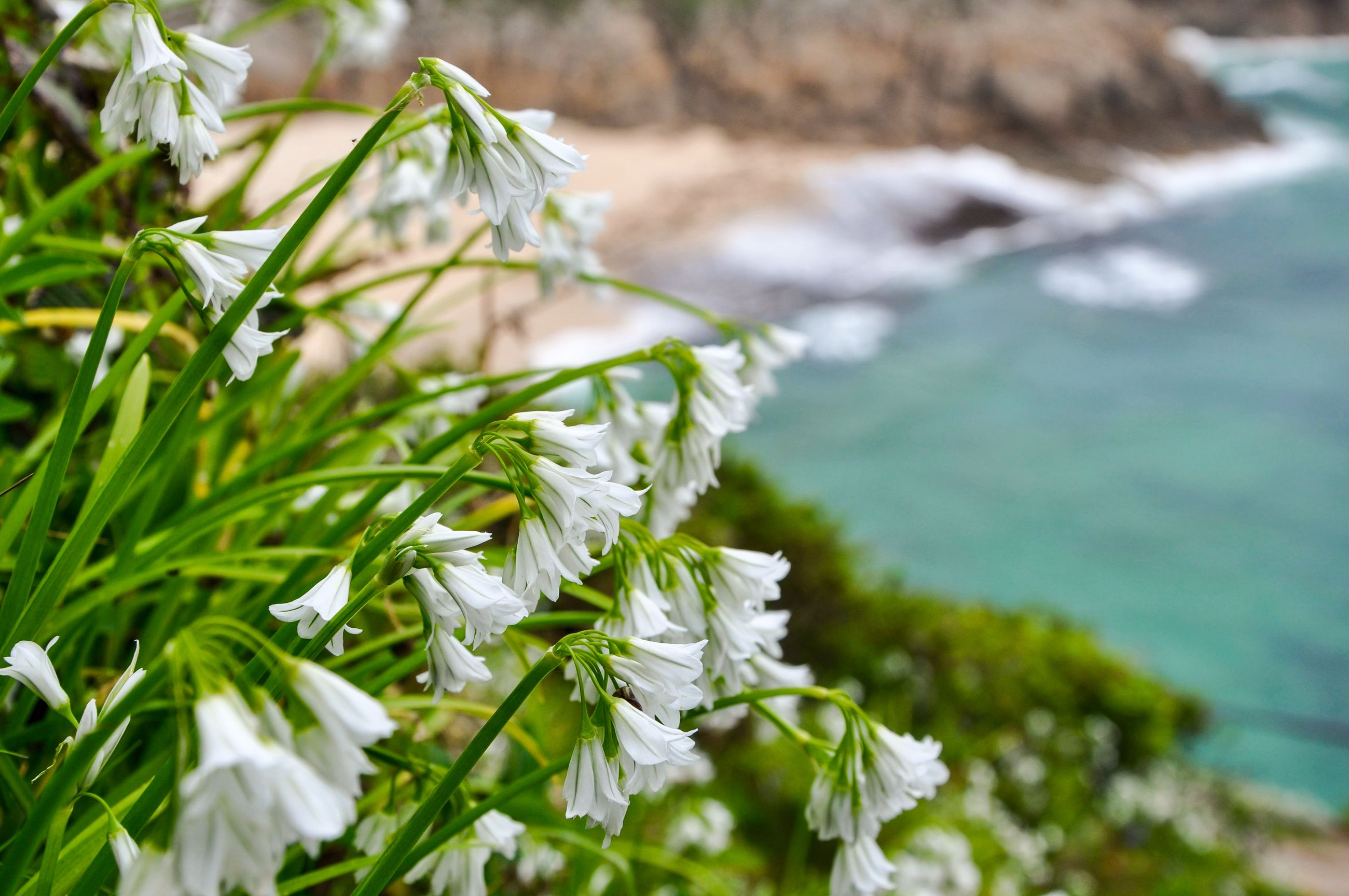 focus on foreground, growth, plant, leaf, close-up, nature, green color, beauty in nature, water, growing, freshness, selective focus, tranquility, day, stem, outdoors, green, no people, fragility, white color