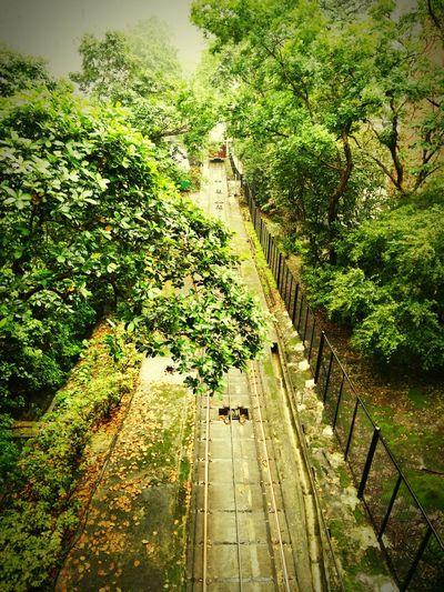 Peak Tram One Way Nature Hiking Trail The Peak Trees Tram Tramway Walking Up Mizunoshoes Long Goodbye