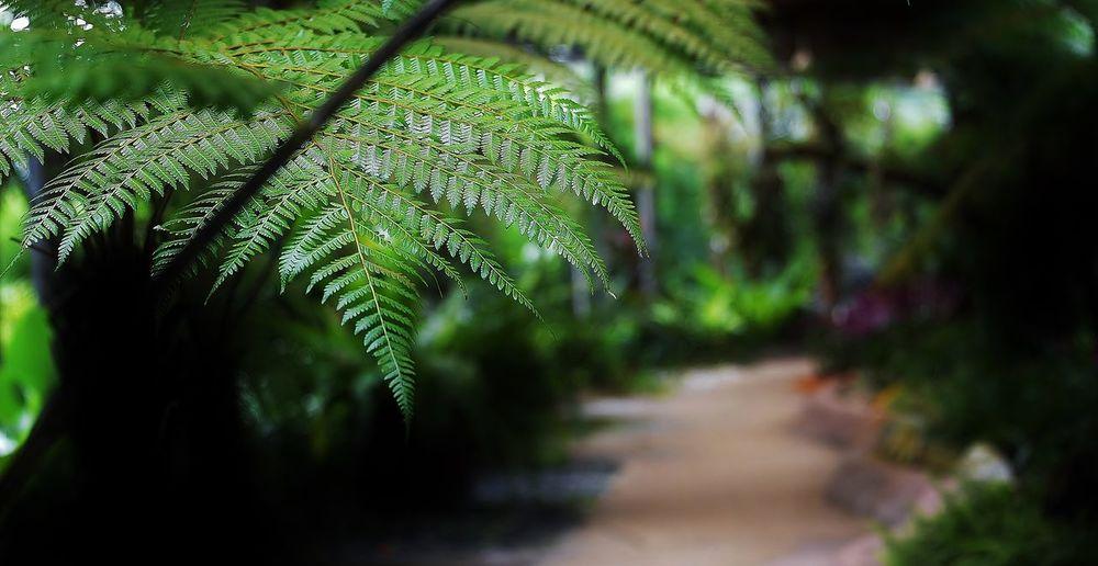 Green. Beauty