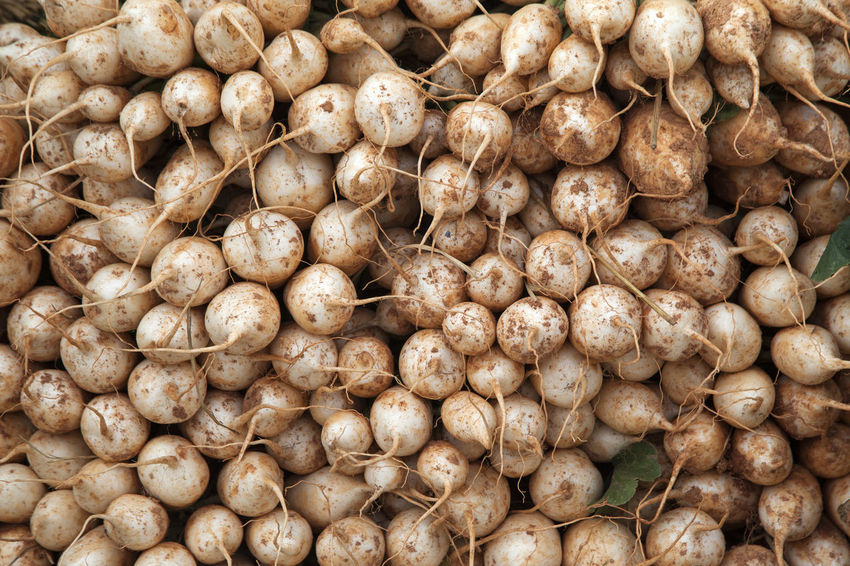 market for vegetable, fruit and fishery Backgrounds Brown Close-up Daikon Day Food Food And Drink For Sale Freshness Full Frame Healthy Eating Horizontal Large Group Of Objects Market Nature No People Raw Food Vegetable Vegetables White Radish Whole