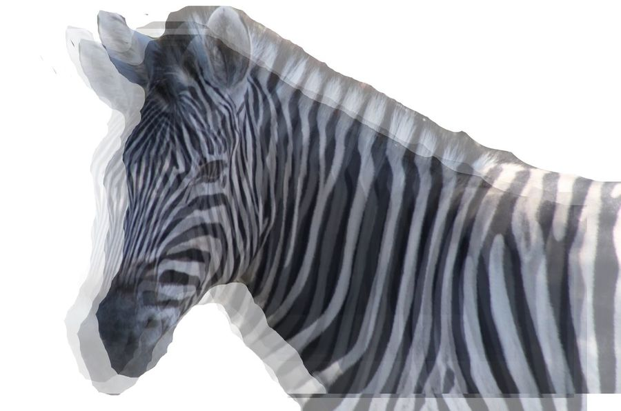 Zebras... Abstract Abstract Photography Africa African African Beauty Black And White Black And White Photography Blackandwhite Blackandwhite Photography Close-up Nature White Background Wildlife Wildlife & Nature Wildlife Photography Wildlife Photos Zebra Zebra Stripes Zebras