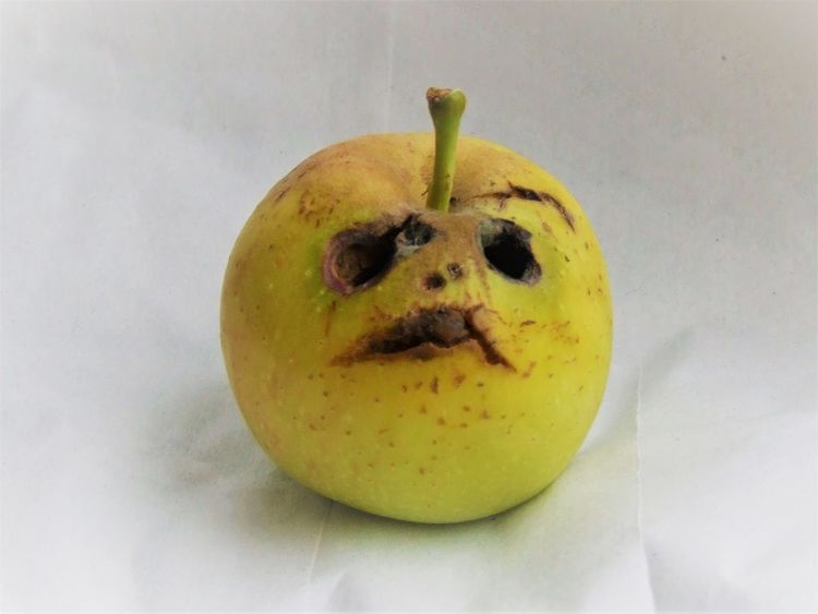 oh no! OH NO! Anthropomorphic Face Apple - Fruit Close-up Day Food Food And Drink Freshness Fruit Healthy Eating Indoors  No People