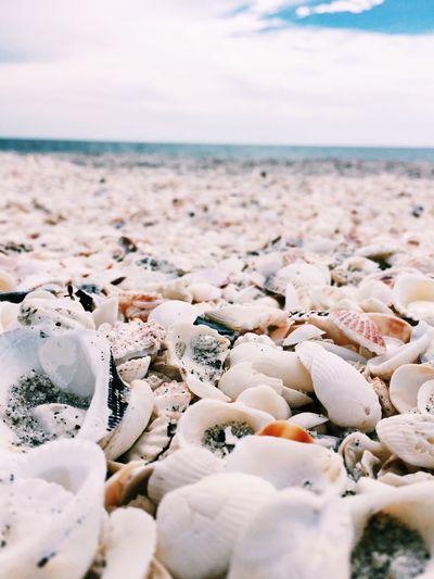 Shells First Eyeem Photo