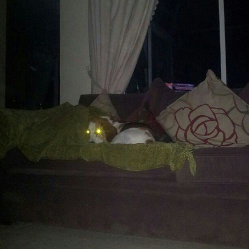 The all seeing dog