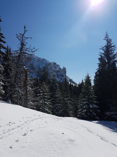 Beauty In Nature Cold Temperature Coniferous Tree Covering Day Environment Landscape Mountain Nature No People Non-urban Scene Pine Tree Plant Scenics - Nature Sky Snow Snowcapped Mountain Sunlight Tranquil Scene Tranquility Tree Winter