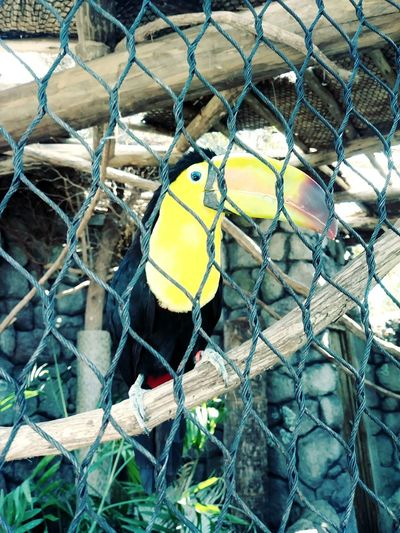 Toucan Bird Photography Wings EyeEm Selects Jungle Fence Full Frame Close-up