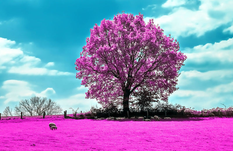 Pink flowering plant on field against sky during winter