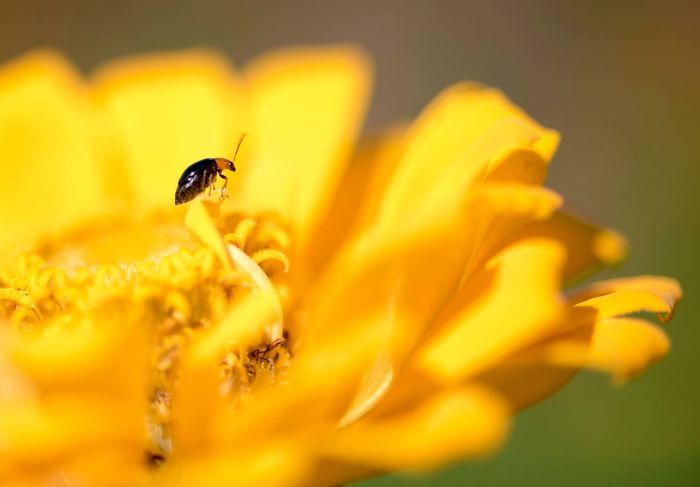 Paint The Town Yellow Flower Petal Insect Fragility One Animal Animals In The Wild Animal Themes Flower Head Nature Freshness Yellow Beauty In Nature Growth Plant No People Selective Focus Close-up Animal Wildlife Outdoors Day