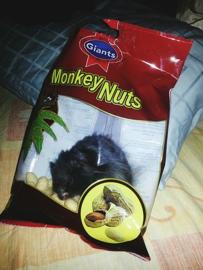 Rodent infested bag :)) Pets