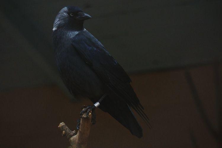 Bird perching outdoors