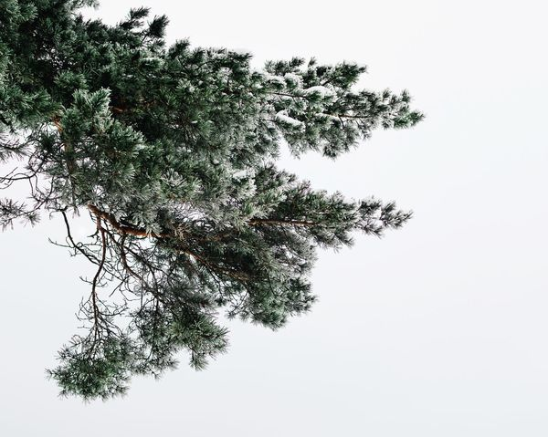 The seasons ❄️🌲🌳 Winter Trees Frosty Minimalistic Minimal Simplicity Tree Growth Low Angle View Nature Clear Sky No People Day Branch Outdoors Beauty In Nature