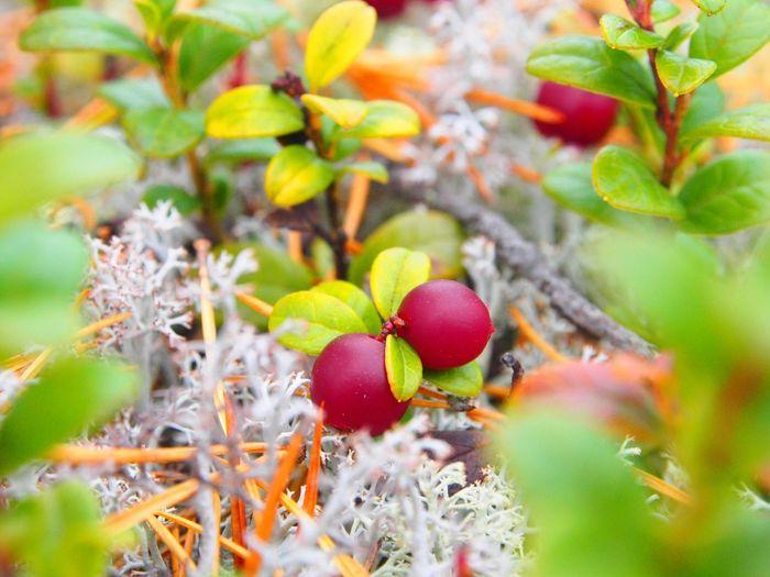 Full frame shot of fruits growing on plants