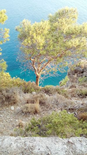 Ionian see married with a tree