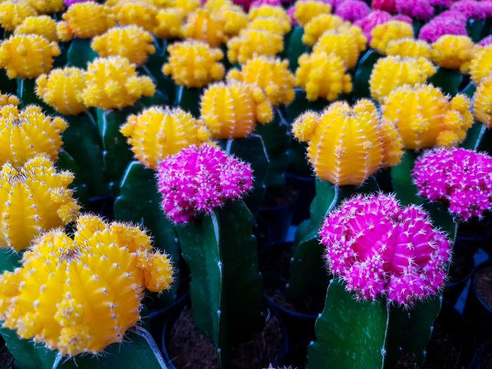 Graft Cactus