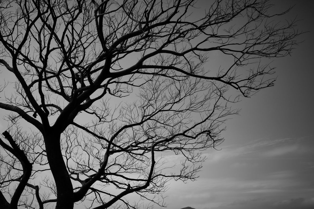 LOW ANGLE VIEW OF BARE TREE AGAINST SKY AT DUSK