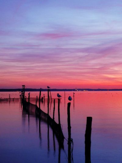 Seagulls Perching On Silhouette Wooden Posts In Baltic Sea During Sunset