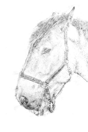 Sketch - Head shot of a horse Animal Animal Themes Close-up Day Domestic Animals Drawing Hatching Headshot Horse Horses Line Drawing Mammal Mammals No People One Animal Outdoors Sketch Sketching White Background