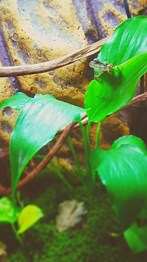 Terrarium Flog 両生類 カエル Amphibians Plant Part Plant Green Color Growth Nature