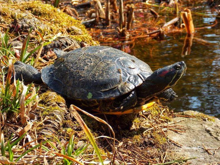 Turtle Water
