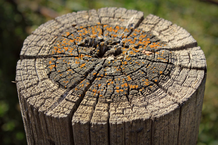 Aged Fencepost Circle Close-up Concentric Crack Cracked Cross Section Farm Farm Life Fencepost Lichen Montana Nature No People Old Orange Ranch Ranch Life Rustic Textured  Tree Ring Wood - Material