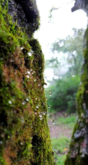 Tree Log Moss-covered Monsoon Waterdrops Tree Close-up Sky Grass Green Color