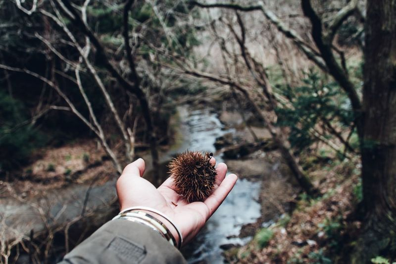Travel Destinations Tranquility Exploring Landscape River Autumn Winter Personal Perspective POV Human Hand Hand One Person Human Body Part Real People Tree Personal Perspective Nature Focus On Foreground Plant Day Lifestyles Leisure Activity Holding Water Unrecognizable Person Body Part Land Outdoors Finger My Best Photo