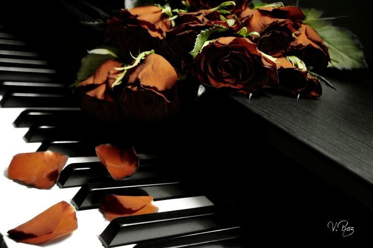 One day, one rose... Happy friday https://youtu.be/OmLNs6zQIHo Piano Moments Close-up Piano Rose🌹 Romantic Capture The Moment Love Flowerpower Playing With Light Roses Darkart Red Passion Flower Light And Shadow No People Indoors  Melancholy Darkness And Light Creative Light And Shadow