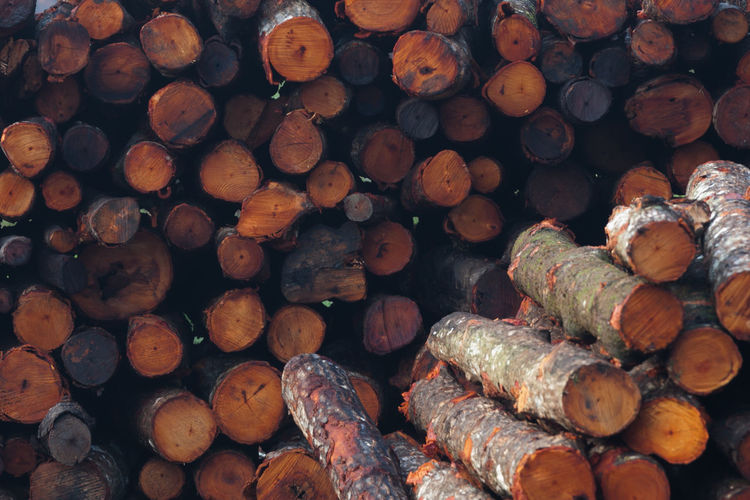 Full frame of stacked logs
