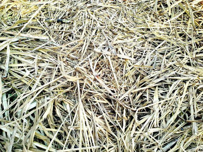 Drygrass Texture