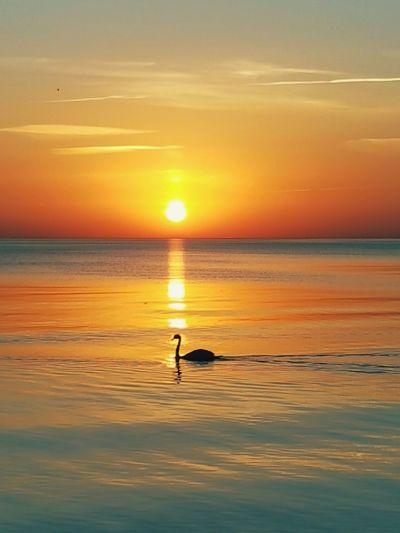 Water Bird Sea