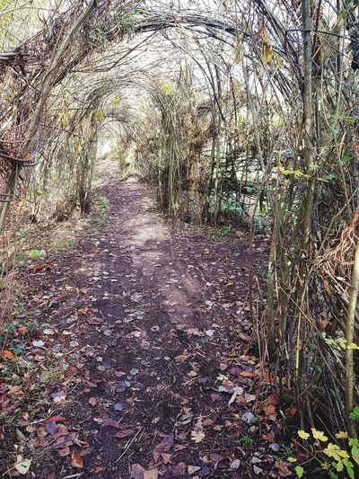 Arches Leaves🌿 Tunnel Weaved Sunday Walks Great Notley Essex Simple Moments Simple Photography Discovery Park Amaturephotography Nature No People Autumn Trees Beauty In Nature Autumnal Colours Growth Outdoors Nature Grass As One Mothernature Full Frame Day