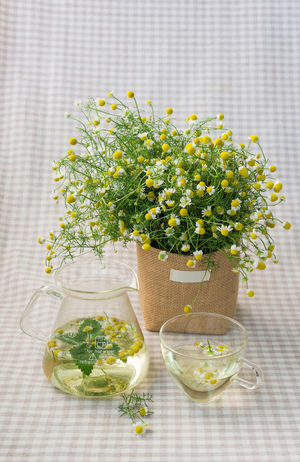 Chamomile tea Abundance Abundance Of Flowers Afternoon Chamomile Cup Dramatic Sky Flower Glass Green Color Harvest Healthy Healthy Eating Herb Home Leisure Activity Lifestyle Peace Pot Soft Spring Summer Tea