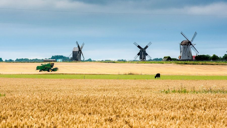 Rural landscape with traditional windmills