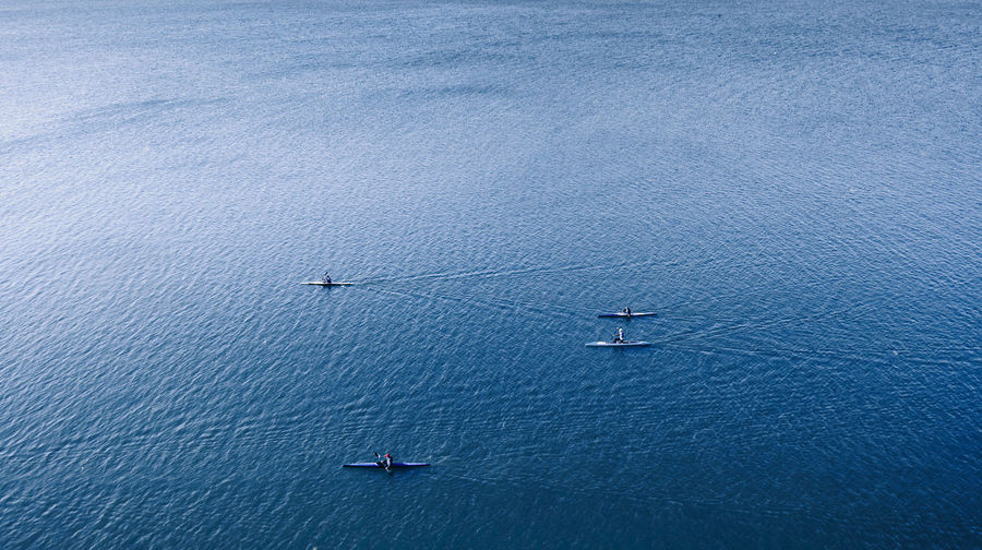 Aerial view of people sculling in sea