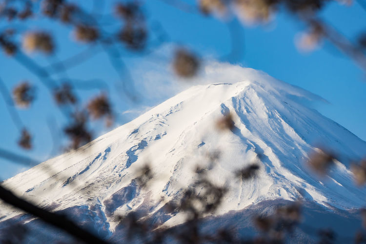 Fuji Mountain Sakura Beauty In Nature Close-up Cold Temperature Day Environment Focus On Foreground Frozen Land Mountain Mountain Peak Nature No People Outdoors Sakura Blossom Selective Focus Snow Snowcapped Mountain Sunlight Tranquility White Color Winter Wood - Material