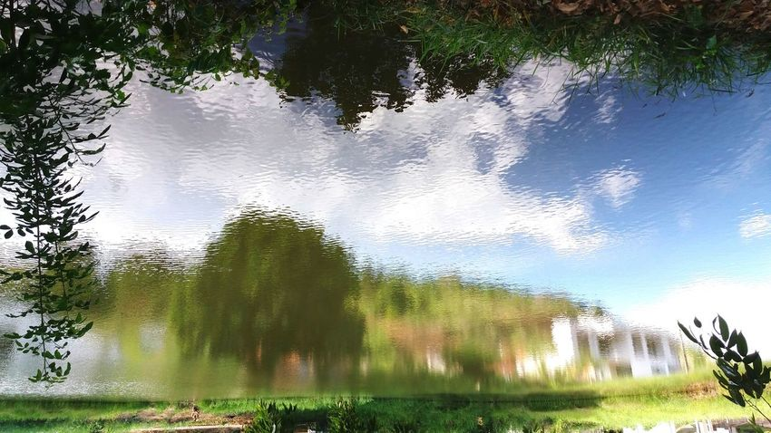 Reflection Water Nature Tree Lake No People Full Length Natureza Tranquility Nature Collection EyeEm Best Shots - Nature Upside Down Reflections Brazil Outdoors EyeEmBestPics Brasil Nature The Great Outdoors - 2017 EyeEm Awards Live For The Story The Street Photographer - 2017 EyeEm Awards The Architect - 2017 EyeEm Awards The Photojournalist - 2017 EyeEm Awards The Portraitist - 2017 EyeEm Awards Out Of The Box Place Of Heart EyeEmNewHere Let's Go. Together.