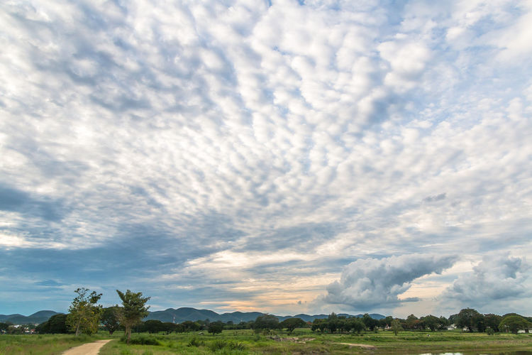 Landscape in cloudy day with fluffy cloud Background; Blue Sky; Cloudy; Day; Evening; Fluffy Cloud; Grass; Green; Landscape; Local Road; Meadow; Mountain; Nature; Outdoors; Sky; Sunny; Terrain; Trees; Tropical; White Cloud;