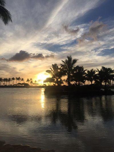 Nature Palm Tree Reflection Sea Sunset Sunset Over Paradise Tranquility Tree