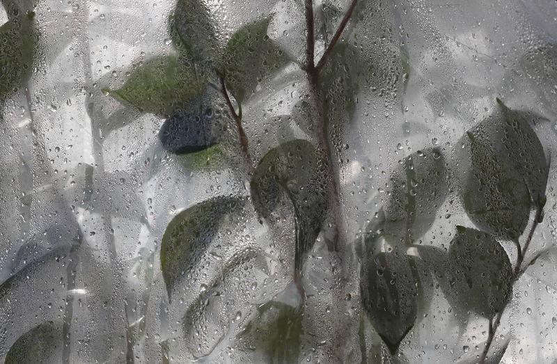 100mm Begonia Close-up December 2015 Detail Drops Full Frame Leaves Rabland,sudtirol Water Wet Wintertime