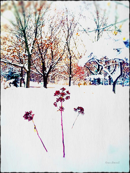 Showcase: December confettiIndasnow Winter December EyeEm Nature Lover Peace Poetic Imagery StreamzooVille Patterns In Nature Attraction My Love Life