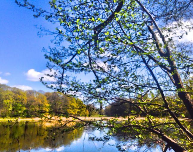 JungfernheidePark Springtime 2016 Eyem Best Shots Nature_collection EyeEm Nature Lover Blue Sky Clouds And Sky Berlin Nature Wasserturm Nature Photography Berliner Ansichten Berliner Seen