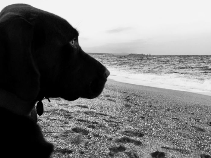 Be. Ready. Dog One Animal Pets Domestic Animals Animal Themes Mammal Beach Sea Water Sand Close-up Day Nature Outdoors Horizon Over Water Sky No People Illes Medes EyeEmNewHere Black And White Friday Nature Beachphotography Dogs Adventure Black And White Friday