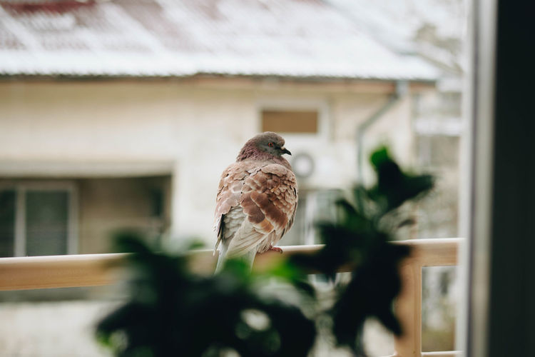 Bird Animal Themes Vertebrate Animal One Animal Architecture Built Structure Animals In The Wild Animal Wildlife Building Exterior Building No People Selective Focus House Day Window Focus On Foreground Perching Outdoors Nature